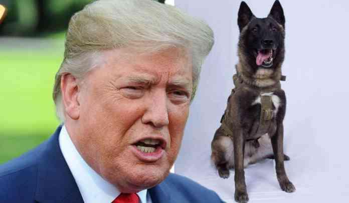 donald-trump-dog