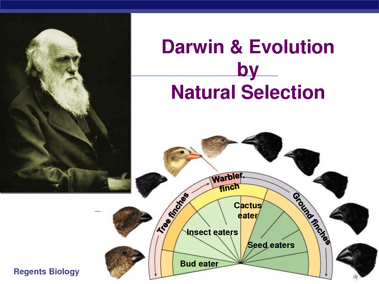 Theory Of Evolution Four Parts Of Darwins Theory Of Evolution