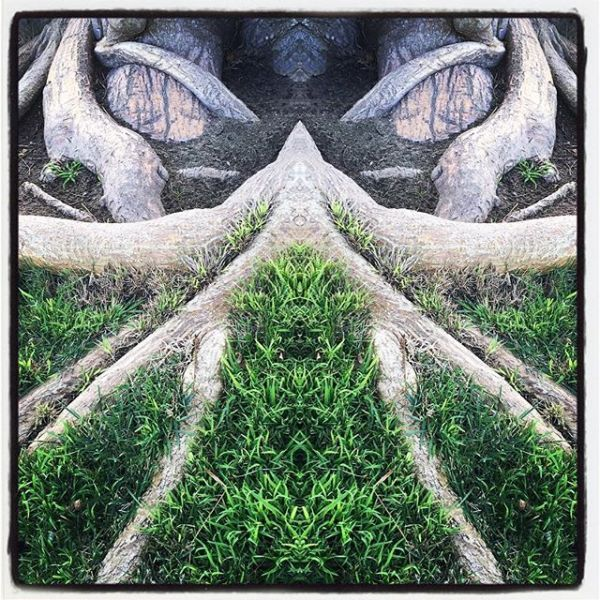 Tree Roots Abstract - Angry Sorcerer (edit)