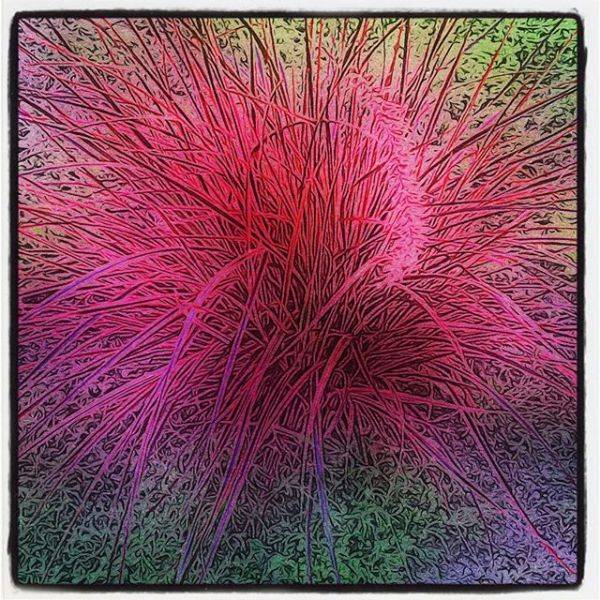 Pink Plant Over-Emphasized
