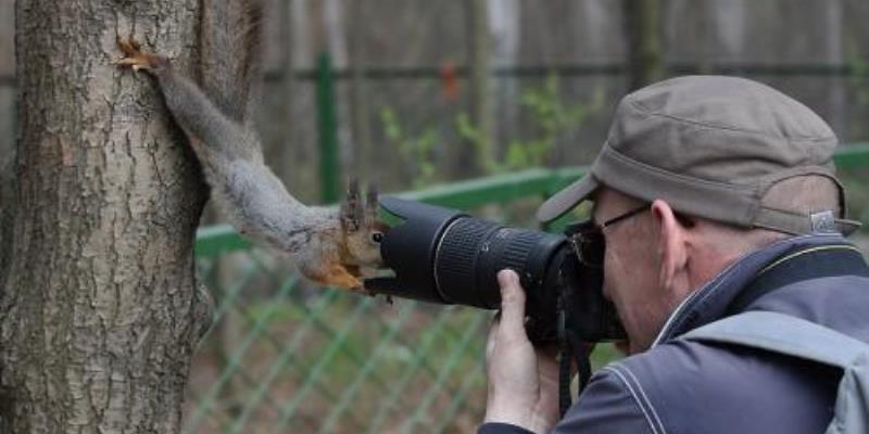 Realização Empreendedora Curiosidade Esquilo