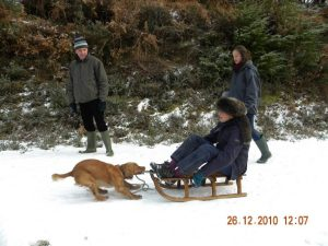 Rufus sledge small