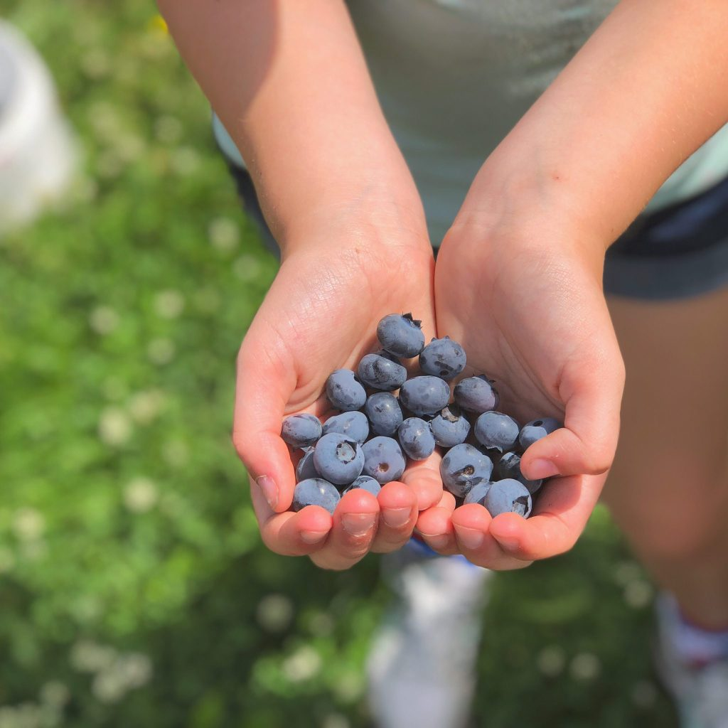 Hoffman Farms Store Really Into This Blueberries