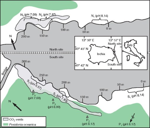 Overview of the area that was surveyed