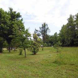 10 acres-62718-Meadow-4