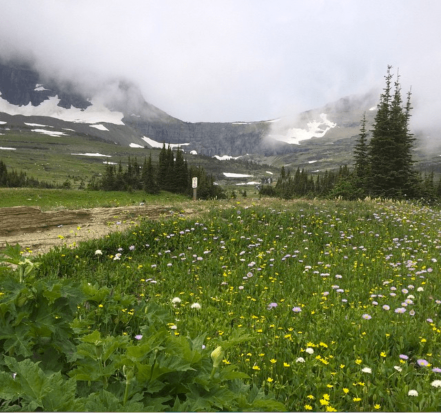 Glacier National Park: Just 2.5 hours from @Submittable headquarters. #Montana