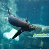 SeaWorld Launches AnimalVision to Learn From Home
