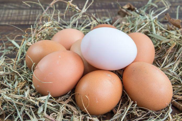 Vasilha com água ajuda a descobrir se ovo está estragado. Foto: Google