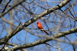 Cardinal2_realreality productions_2016_03_29