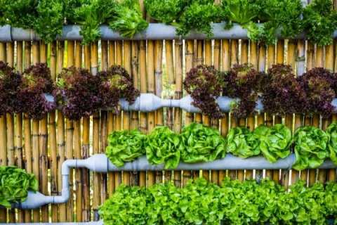 Permalink to: Short on Growing Space? Build a Vertical Garden: Your Very Own Wall Of Bounty