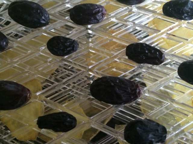 dehydrating grapes
