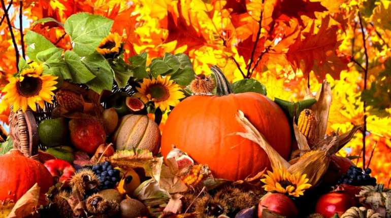 fall garden tasks: Bring in the harvest
