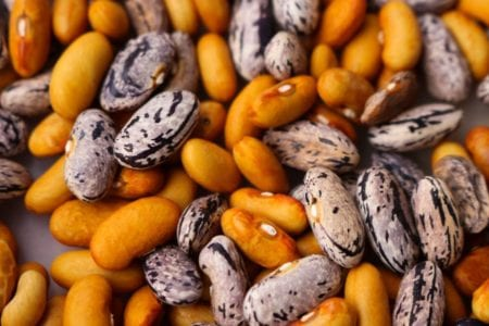Permalink to: Seed Saving Basics: How to Save Seeds for Beginners