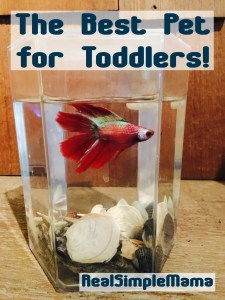 The Best Pet for Toddlers! - RealSimpleMama