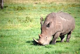 Eco-Tourism - Marginalising the Maasai?