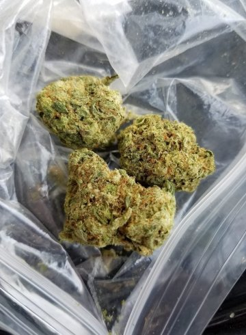 green crack weed strain