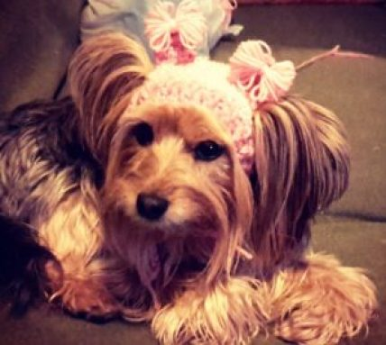 cope-with-disability-image-of-dog-with-cute-bow