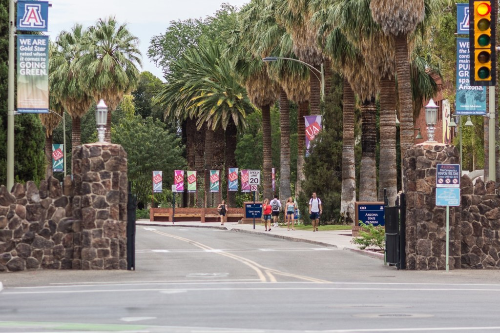 Towering palm trees line University Boulevard at UA campus in Tucson, Arizona