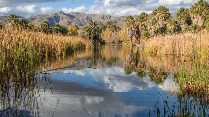 agua caliente park with lake and mountains