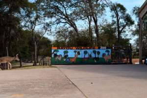 Bayou Wildlife Zoo is located south of Houston in Alvin.
