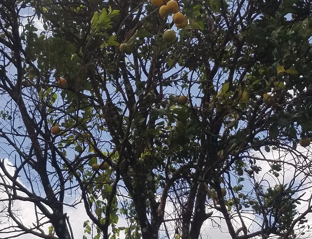st lucia agriculture land for sale with fruit trees