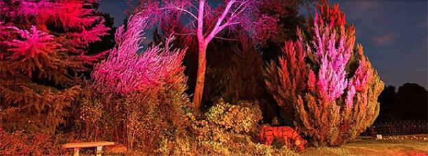 Sacramento_Wedding_Wedding_Venue_Newcastle_Wedding_Gardens_Trees