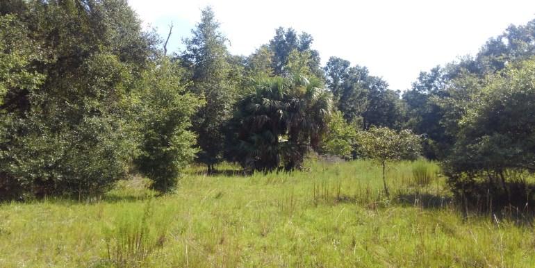 habbard meadow big palm