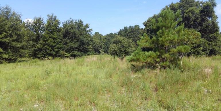 habbard pasture A (Medium)