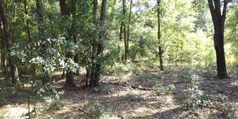 habbard woods understory Medium