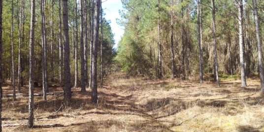 42.8 acres Winding River Preserve