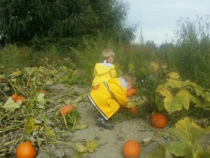 fall activities with kids | picking pumpkins at the pumpkin patch