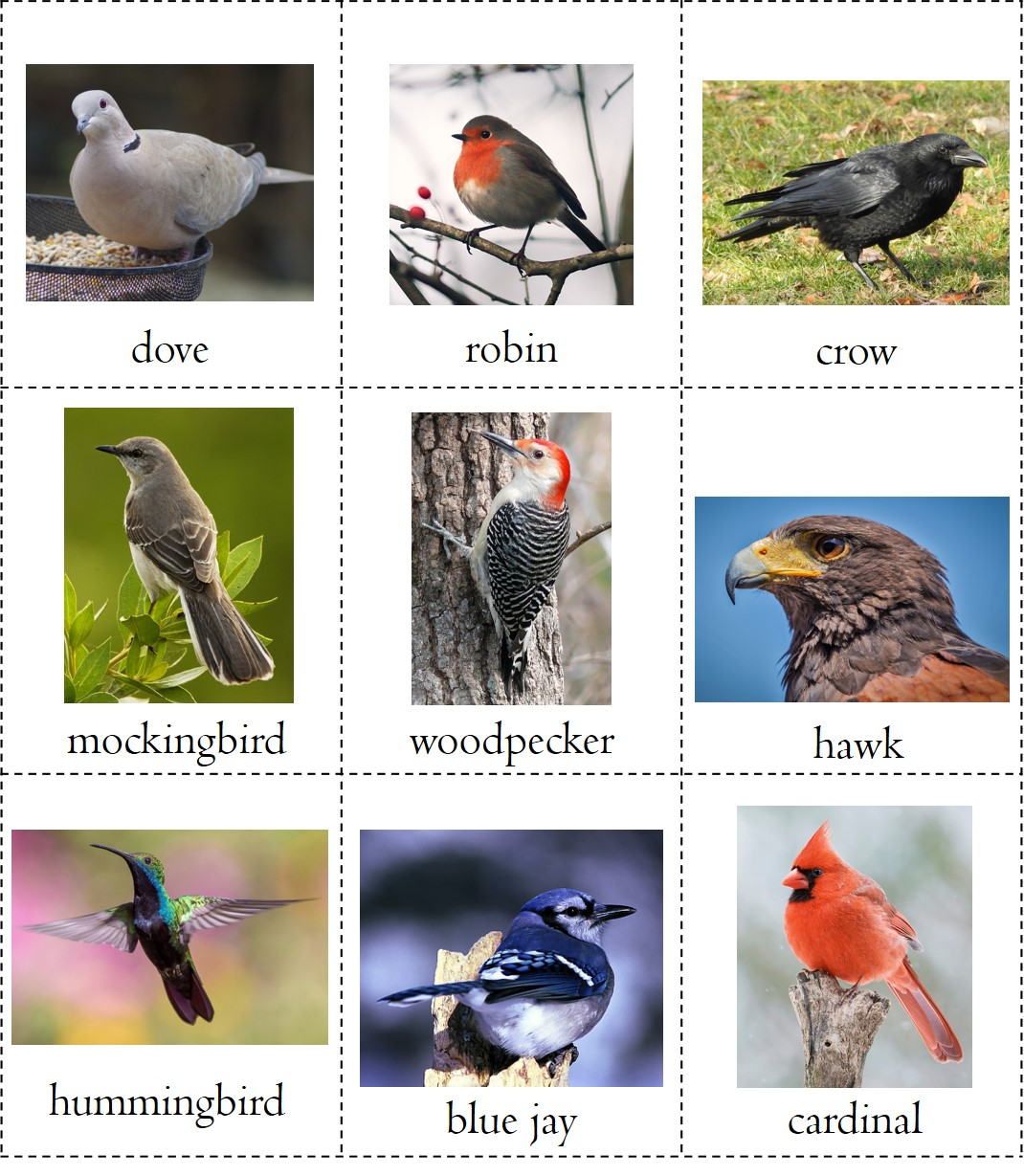 photo regarding Printable Birds called Character analysis cost-free printable Fowl E-book ⋆ R.E.A.L.-Worldwide College students