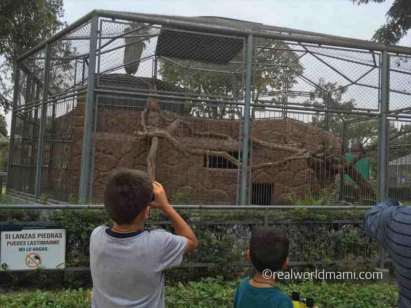 Peru with kids watching the monkeys