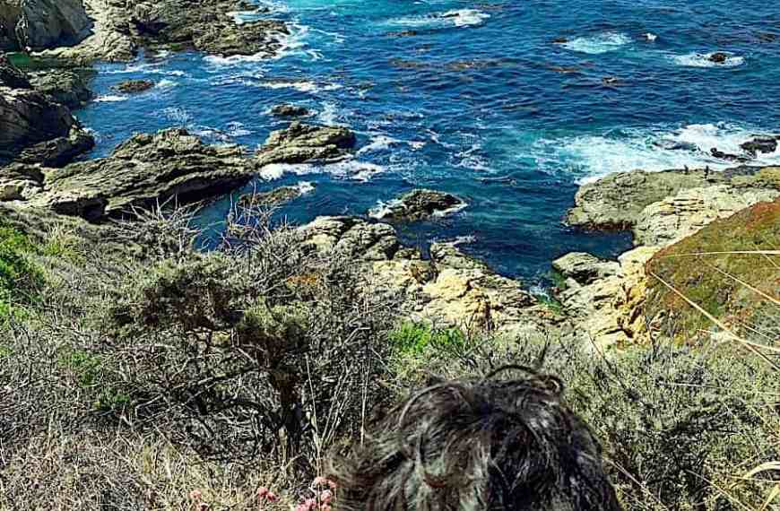 HOW TO PLAN A TRIP TO BIG SUR-10 THINGS TO DO IN BIG SUR WITH FAMILY