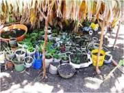 Many containers including bottles can be cut and used in developing a plant nursery