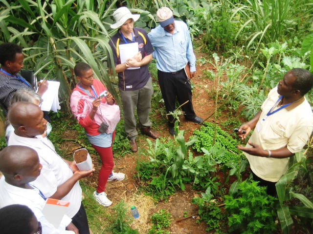 George teaching on Artemisia harvesting and cuttings at Natural Medicines Training Seminar