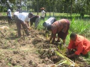 Teaching a group how to plant vetiver grass