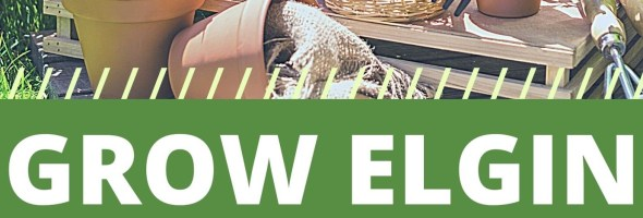 Grow Elgin Bulletin