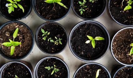 Online Gardening Workshops – Live Zoom Sessions
