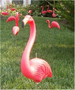 Flamingo_1