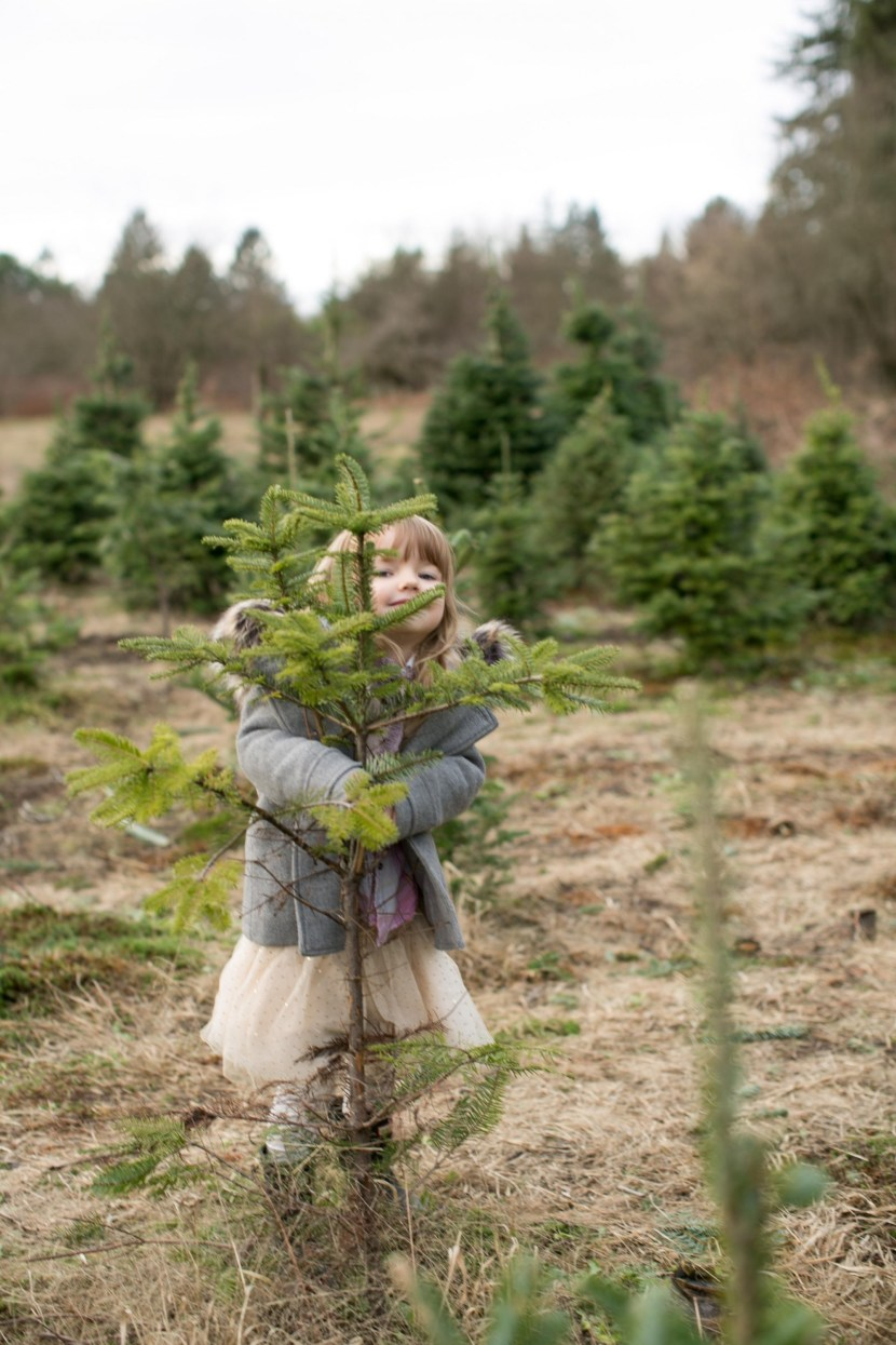 christmas tree farm-rebbi anderson-3