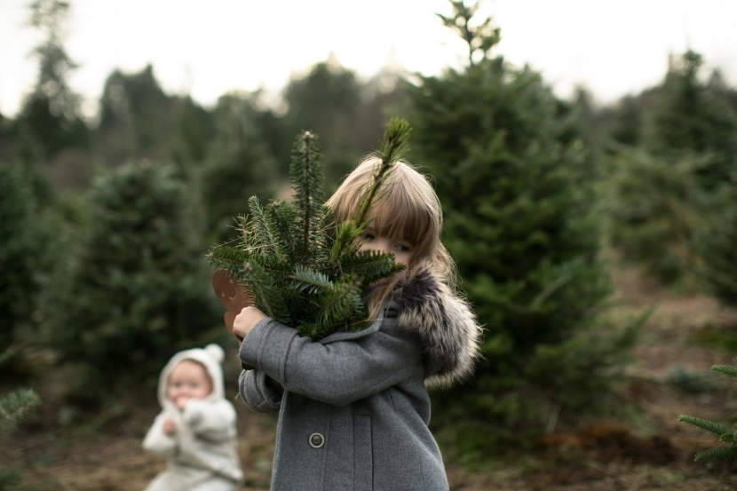christmas tree farm-rebbi anderson-55