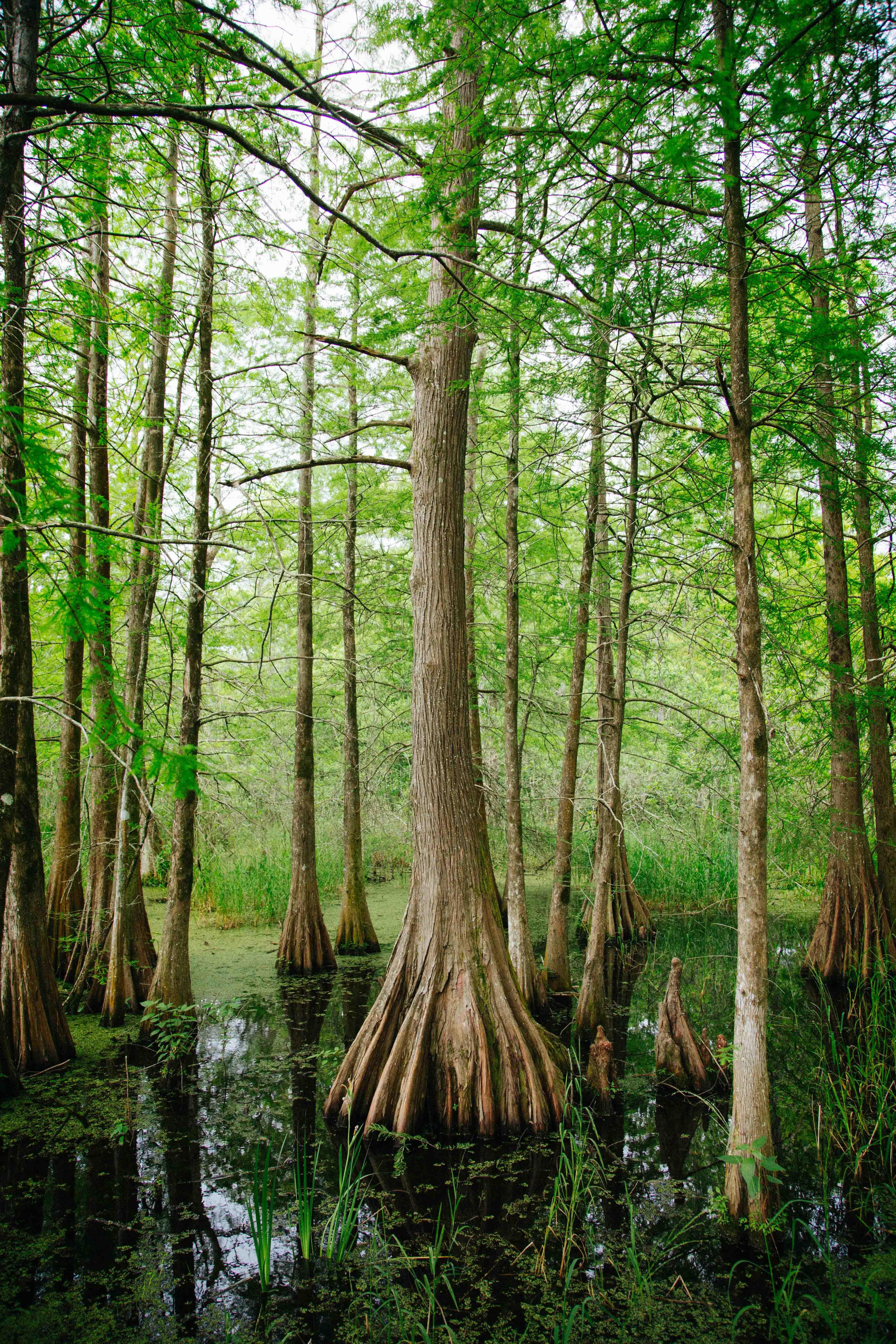 swamp rebecca renner