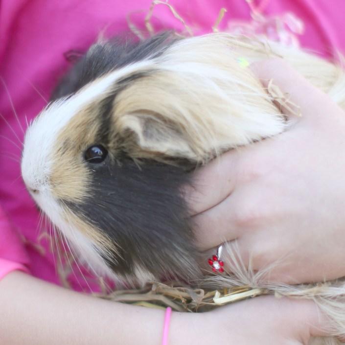 Pet Photography at Rebecca Dawe Photography