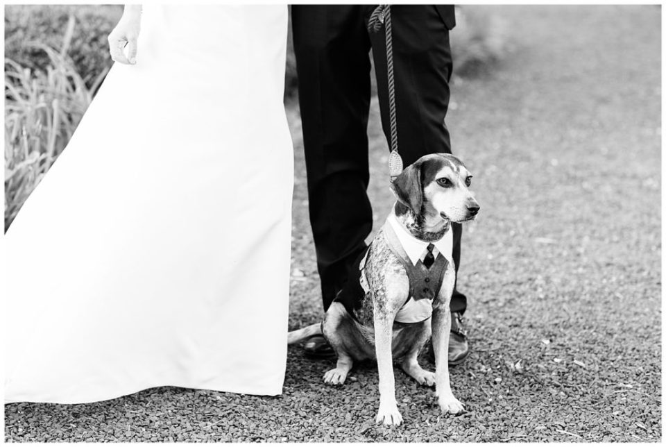 Best dog. Wedding. Old House Vineyards.