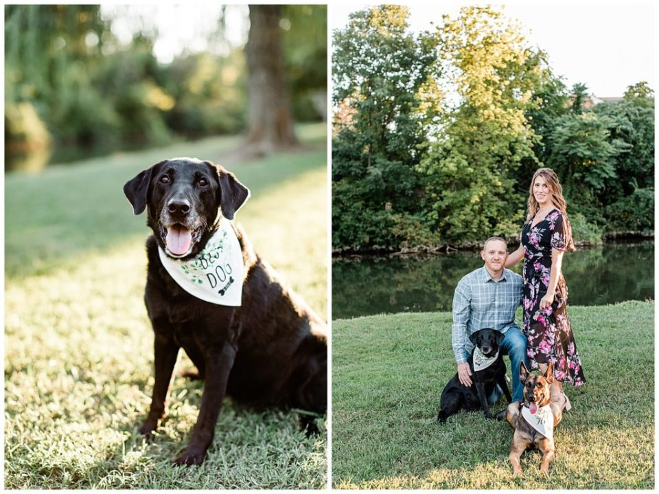 Black lab. Engagement session.