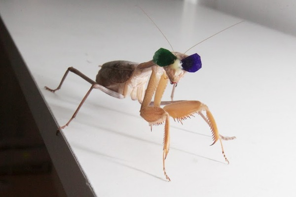 Science Tuesday: Four New Elements, Dancing Dinosaurs, and 3-D Glasses for Praying Mantises