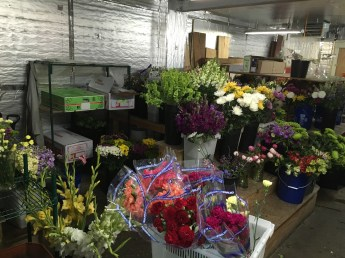 Ziegler's Florist in Horsneads, NY is amazingly wonderful to me. They let me go in the back and check out all their flowers.