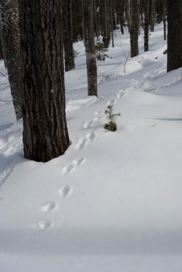 More fisher tracks.