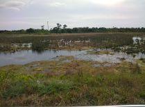 Florida 2015 image